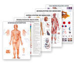 Anatomical Posters