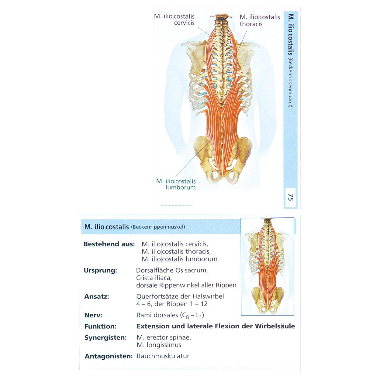 Atemberaubend Grundlagen Der Menschlichen Anatomie Und Physiologie ...