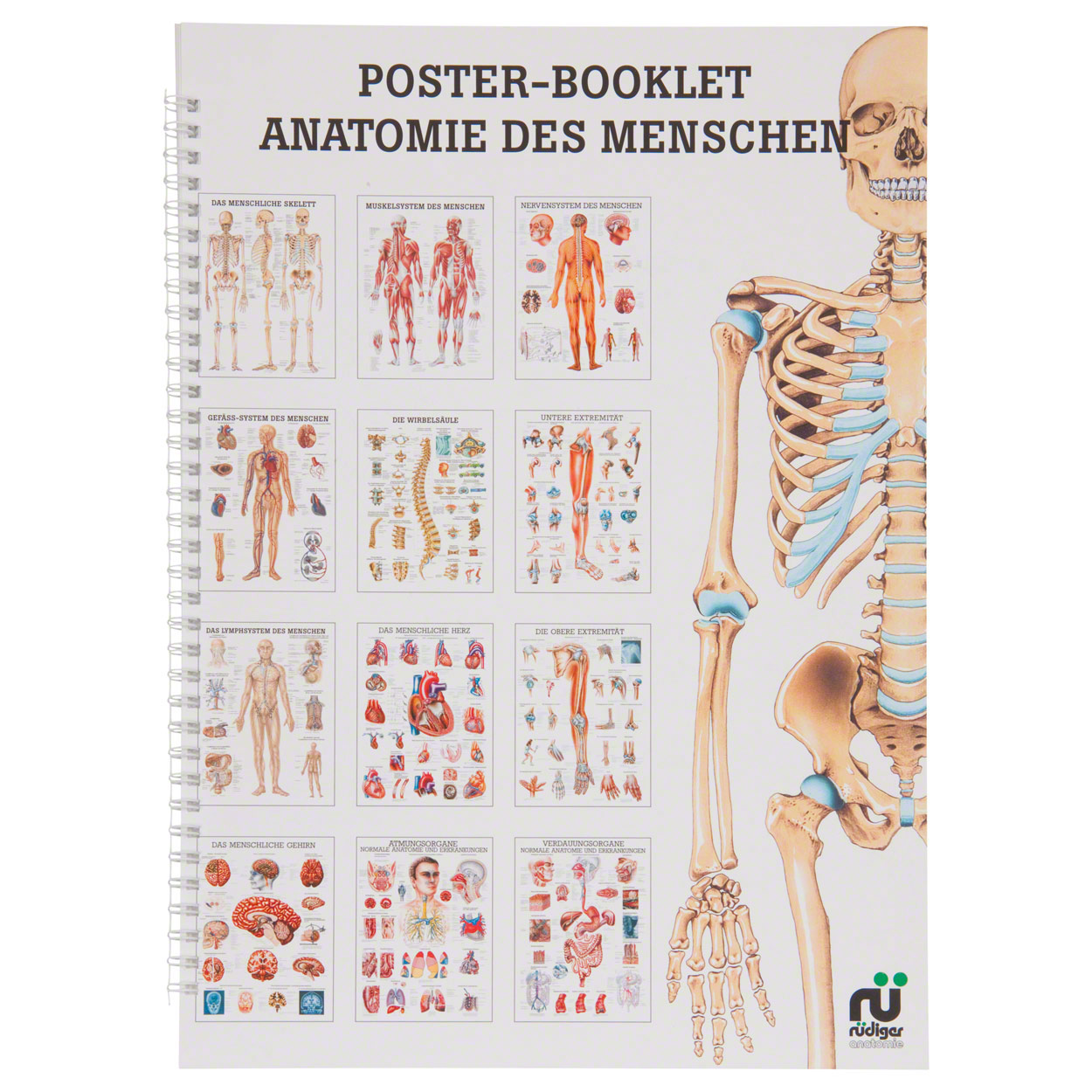 Mini poster booklet - Human anatomy - , LxW 34x24 cm, 12 posters ...