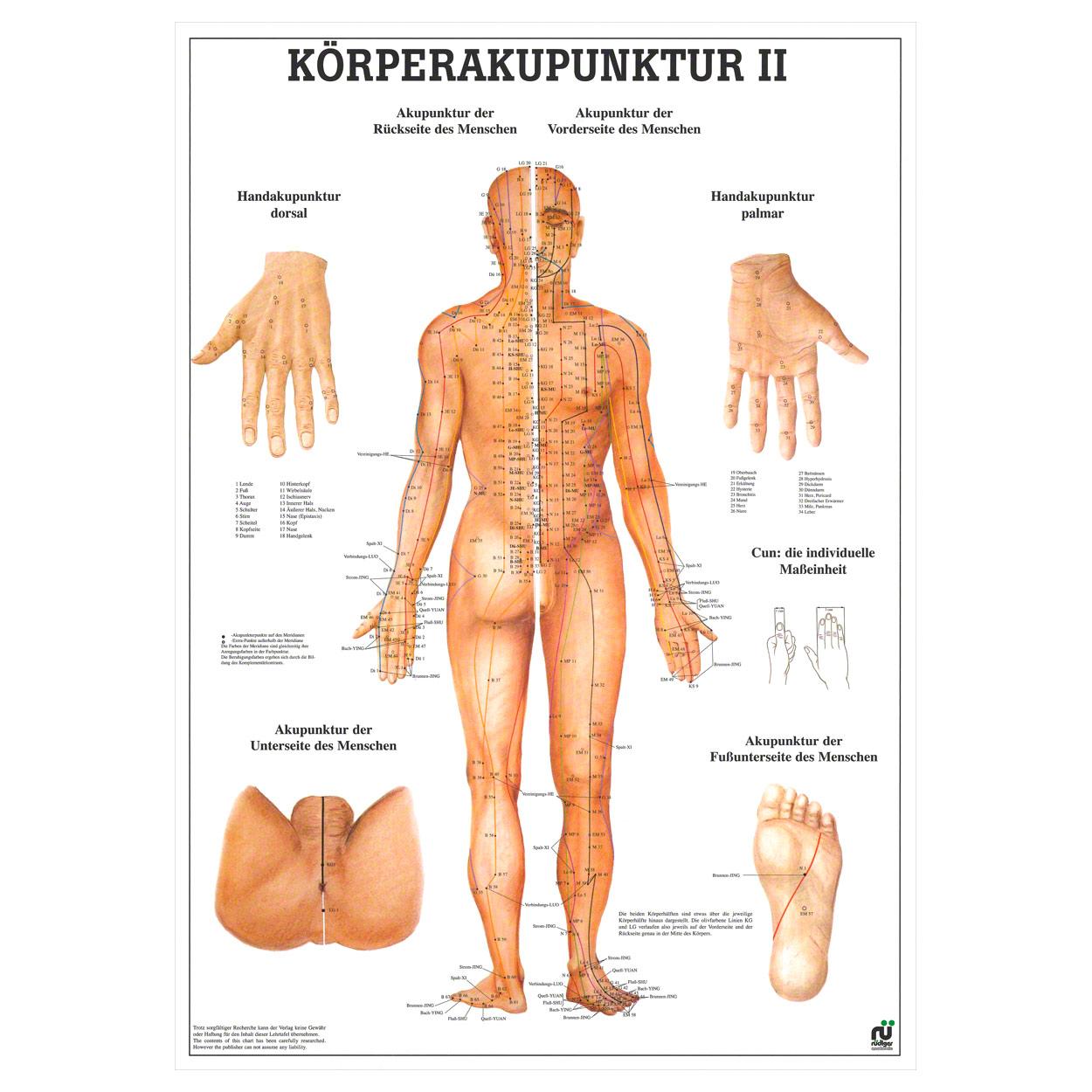 Charmant Klein Von Der Rückseite Anatomie Bilder - Menschliche ...