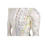 Acupuncture figure male, 45 cm