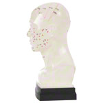 Acupuncture model head, 20 cm