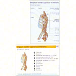 Flashcards musculo-skeletal system, set of 2