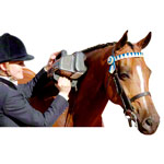 Thumper professional horse massager Equine Pro