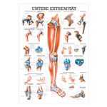 Mini-poster - Lower limb - , LxW 34x24 cm