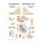 Mini-poster - foot-acupuncture - L x W 34x24 cm
