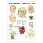 Mini-poster - head-acupuncture - L x W 34x24 cm