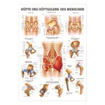 Mini-poster - hip & hip joint - L x W 34x24 cm