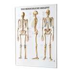 Relief panel The human skeleton, LxW 74x54 cm