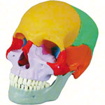 Snap skull, 18-piece, colourful