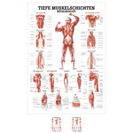 Wall chart - Deep muscle layers-back - LxW 100x70 cm