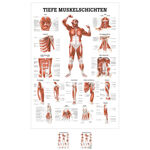Wall chart - Deep muscle layers-breast - , LxW 100x70 cm