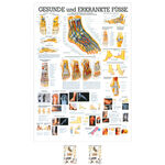 Wall chart - The Foot - , LxW 100x70 cm