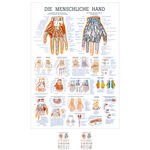 Wall chart - The Hand - , LxW 100x70 cm