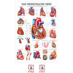 Wall chart - The Heart - , LxW 100x70 cm