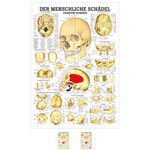 Wall chart - The Skull - , LxW 100x70 cm