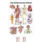 Wall chart - The human body - , LxW 100x70 cm
