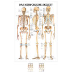 Wall chart - The human skeleton - , LxW 100x70 cm