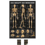 Wall chart - The human skeleton - LxW 100x70 cm