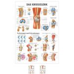 Wall chart - The knee joint - L x 100x70 cm