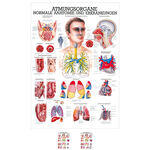 Wall chart - The respiratory system - , LxW 100x70 cm