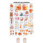 Wall chart - Urinary bladder and urethra - LxW 100x70 cm