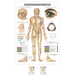Wall chart - body acupuncture, - LxW 100x70 cm