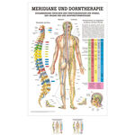 Wall chart - meridians and thorn - , LxW 100x70 cm