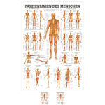 mini-poster Fasciae of the human being, LxW 34x24 cm