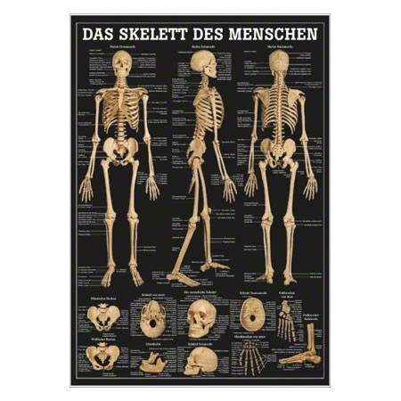 Wall chart - The human skeleton - LxW 100x70 cm - Sport-Tec.com ...